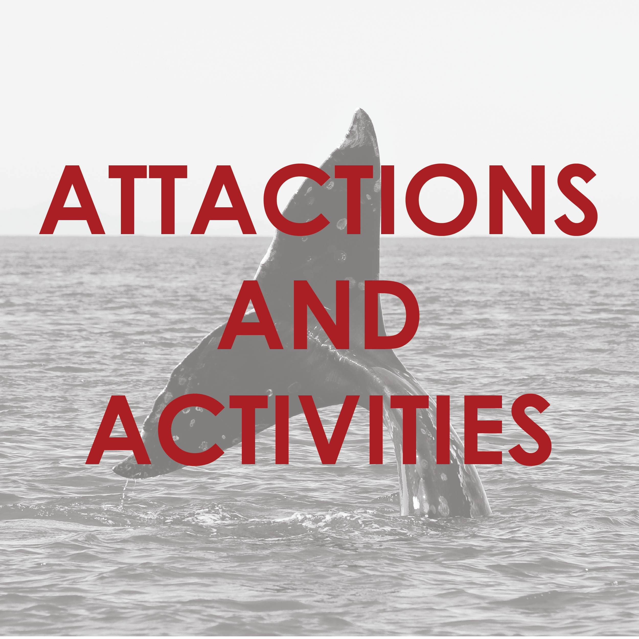 Attract_B&Ws-16